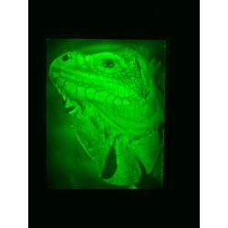 Iguane 10x12,7cm