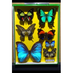 CHIMERA™ stock images Butterflies